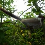 Sparrow Cache Outdoor